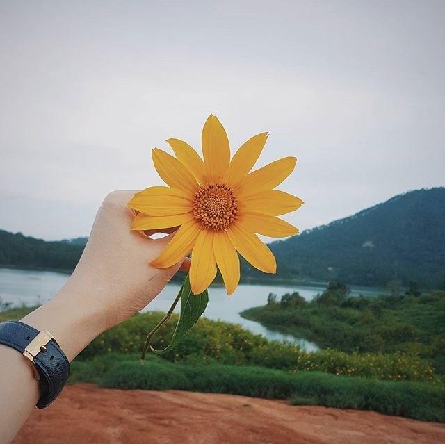 Tháng 10 về - Đã đến mùa hẹn HOA DÃ QUỲ nở rộ đẹp bung trời ở ĐÀ LẠT